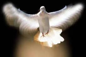 dove-in-flight